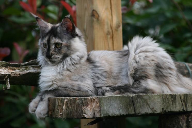 Blue Cat Patchwork Vs